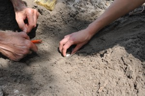 Snapping turtle eggs were handled carefully one at a time