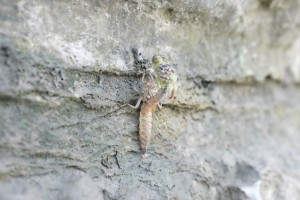 Dragonfly emergency